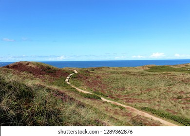 german sylt landscape at the beach of the north sea in late summer autumn with green and red heather pagan and sand