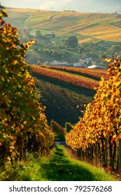 German vineyards in the sunset, stuttgart, fall, golden october
