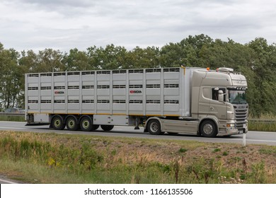 Germany , 27.08.2018 , A24 motorway , A24 motorway - a modern livestock transporter on its way to the slaughterhouse
