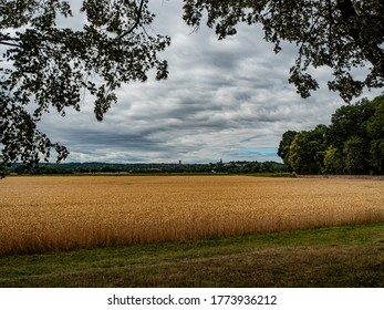 Brühl, Germany, 5 July 2020. Field of golden, ripe ears of grain ready for harvest in summer with trees in foreground and village in the back.