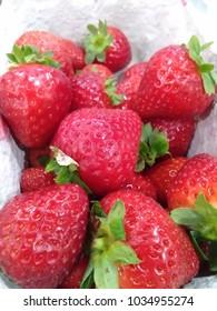 Germany Fresh Strawberries