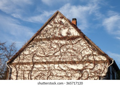 Germany, house facade, gable, overgrown, virginia creeper