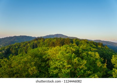 Germany, Over the treetops of Freiburg im Breisgau on Schlossberg tower