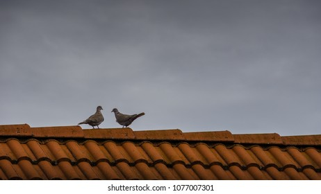 Roof Ridge Stock Images Royalty Free Images Amp Vectors