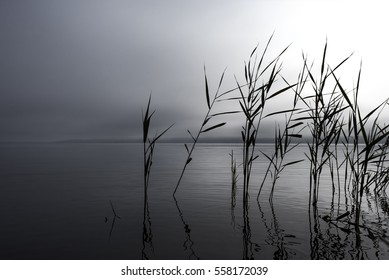 Germany, Tollensesee: Mystic scene of grey foggy lake with single reed plants in calm water.