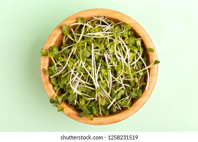 Germinated radish sprouts in wooden bowl on light green background. Vegetable green for garnishing salads, soups, plates, and sandwiches. Copy space