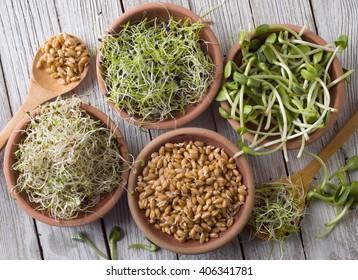 germinated seeds of alfalfa, wheat, onions, sunflower