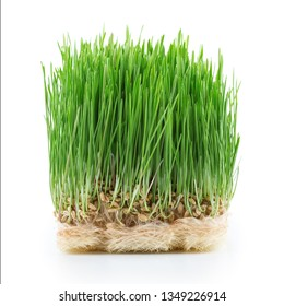 Germinated seeds  - green grass  isolated on white