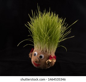 Germinated wheat, a tradition of Saint Andrew's Day. Handmade doll stuffed with wood shavings having wheat sprouts as hair.St. Andrews day national holiday, end of November in Romania. Sprouting wheat