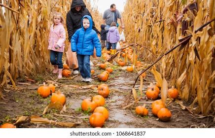 Gervais, Oregon - 10/3/2009:  Children in a pumpkin field selecting their Halloween pumpkin  on a farm near Gervais.