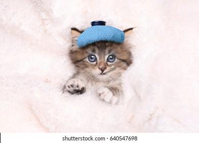 Get Well Soon Kitten That is Sick
