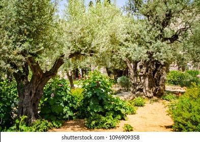 gethsemane garden in jerusalem