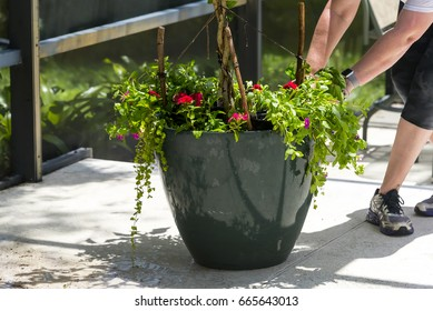 Getting ready to work on a flower pot needing a fix up Planting bright red flowers in a new flower pot