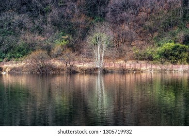 Geumpyeong Reservoir trees  and surrounding nature reflecting on the water. Geumpyeong reservoir is located in Gimje, Jeollabukdo province, South Korea