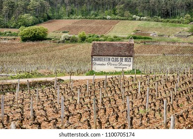 GEVREY-CHAMBERTIN, FRANCE - APRIL 22, 2018: The Clos de Beze vineyard is a grand cru terroir near the town of Gevrey-Chambertin in the Cote de Nuits region of Burgundy.