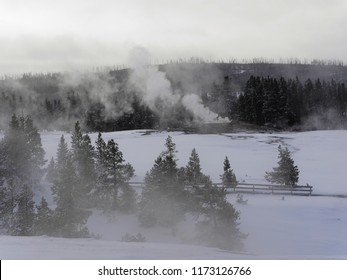 Geyser steam rising above the trees - Yellowstone National Park, USA, in winter time