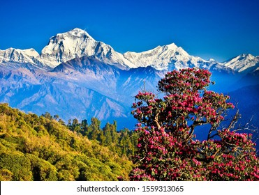 Ghorepani Poon Hill Annapurna mountain range in Nepal. It takes a moderate level of fitness to complete and very beautiful scenery
