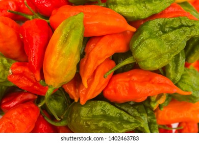 Ghost Chilies are the world's hottest chili pepper