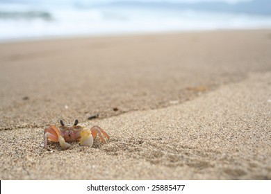 Ghost crab by the seashore
