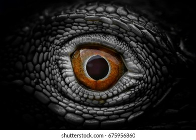 Ghost eye, Eyes of horror, Eyes of devil, Eyes of evil or Eyes of monster Included horror,thriller,freaky and mystery from all over the world into this eye.Concepts for horror festival like Halloween.
