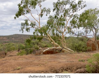 Ghost Gum on ancient Mesa Winton outback Queensland