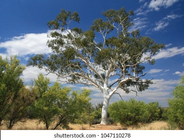 Ghost gum tree in Trephina Gorge Nature Park in outback central australia on a sunny day with white clouds.