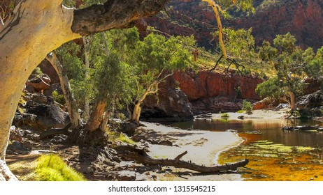 a ghost gum at the waterhole at ormiston gorge in the west macdonnell ranges