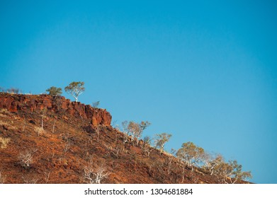 Ghost gums on rocky slope and above red cliff under clear blue sky