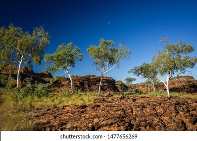 Ghost Gums at rock formation at the Kimberleys with moon in the sky – Western Australia