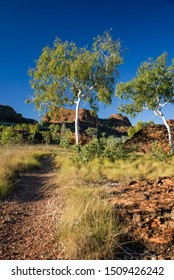 Ghost Gums at rock formation at the Kimberleys – Western Australia