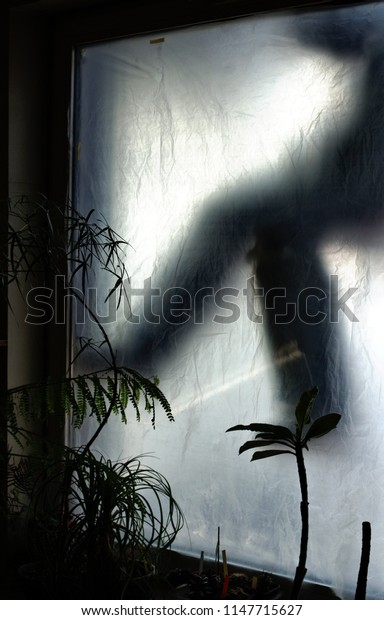 A ghostly figure of a person behind the window. Each one swims and drifts in the air. Flowers in the foreground.