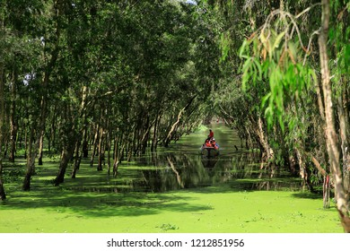An Giang, Vietnam - October 18th, 2018: Tourism rowing boat in Tra Su flooded indigo plant forest in An Giang, Mekong delta. Tra Su Cajuput Forest is located in Van Giao Commune, Tinh Bien Dist