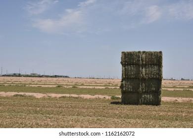 giant alfalfa bales