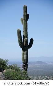 Giant alone Saguaro overlooking McDowell Mountain range from Pinnacle Peak trail, Arizona
