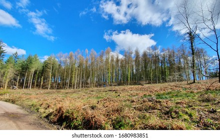 Giant, ancient trees slope across the horizon. Sat atop them is an incredible blue sky, punctuated with clean white clouds. In the foreground, brush and pathway.