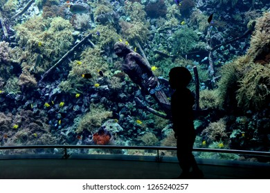 The giant aquariums are full of color and sea life at Antwerp Zoo.
