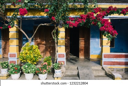A giant Bougainvillea glabra tree with deep red flowers in front of an old house in Dien Khanh, Khanh Hoa, Viet Nam