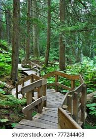 The Giant Cedar Boardwalk in Glacier National Park, Canada