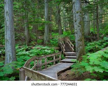 The Giant Cedar Forest Boardwalk Trail in Glacier National Park, Canada
