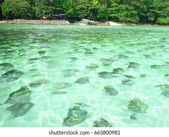 Giant Clams underwater - Camiguin Island