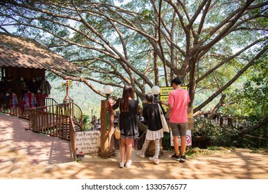 The Giant Coffee Shop on the big tree in Mae Kampong Homestay Village, Chiang Mai Thailand 11 January 2019 Local road to Mae Kampong Village Chiangmai,Thailand.