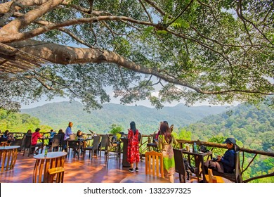 The Giant Coffee Shop on the big tree in Mae Kampong Homestay Village, Chiang Mai Thailand 12 January 2019 Local road to Mae Kampong Village Chiangmai,Thailand.
