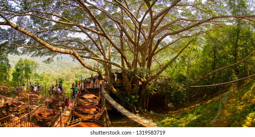 The Giant Coffee Shop(panorama) on the big tree in Mae Kampong Homestay Village, Chiang Mai Thailand 11 January 2019 Local road to Mae Kampong Village Chiangmai,Thailand.