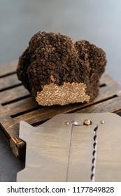 Giant and expensive rare black truffle mushroom