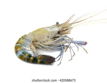 Giant freshwater prawn, Fresh shrimp on white