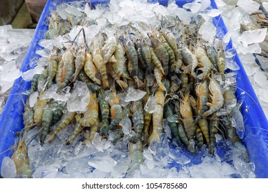 Giant freshwater prawn on ice in plastic bucket at seafood market, Samutsakorn Thailand.