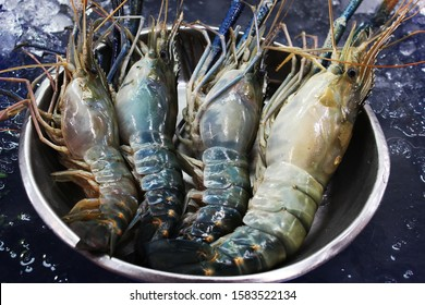 Giant freshwater prawns-Big Headed shrimps-Bigheaded prawns placed on the aluminum tray for sale