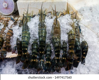 Giant Freshwater Shrimp (Giant Freshwater Prawn) place on ice in fresh market in Thailand with weight scale - River Shrimp big size - River Prawn big size