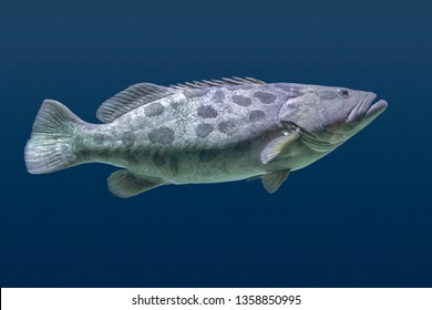 Giant grouper fish swimming in blue aquatic ambiance