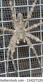 Giant Gruesome Spider